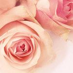 プラセンタには種類が!馬・サーモン・バラ・植物…どれが一番いい?